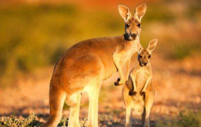 Du học Úc sẽ cần bao nhiêu tiền?